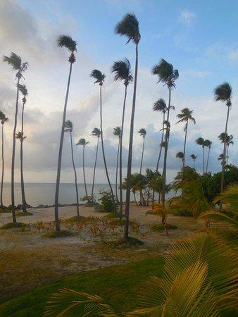 Melia Coco Beach: Beach