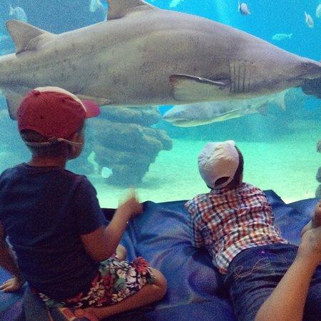 Palma Aquarium: Дети рассматривают акул в большом аквариуме.