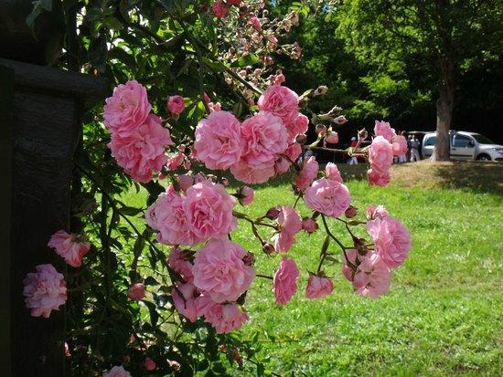 Rosengarten auf dem Beutig : плетистые розы