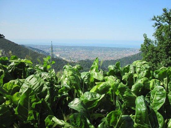 "Agriturismo Biologico""IL PARADISO"": Le nostre Verdure BIO"