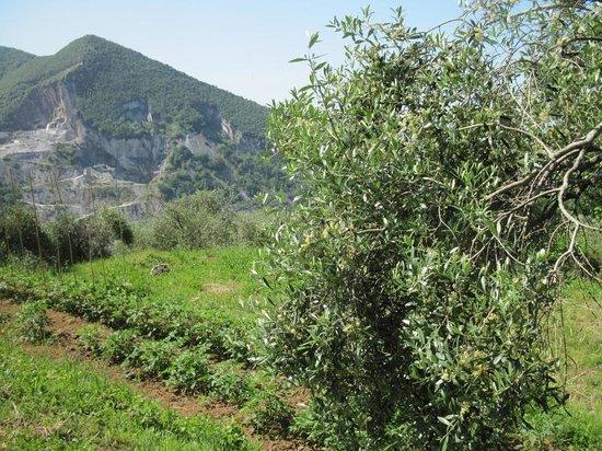 """Agriturismo Biologico""""IL PARADISO"""": La nostra Azienda BIO"""