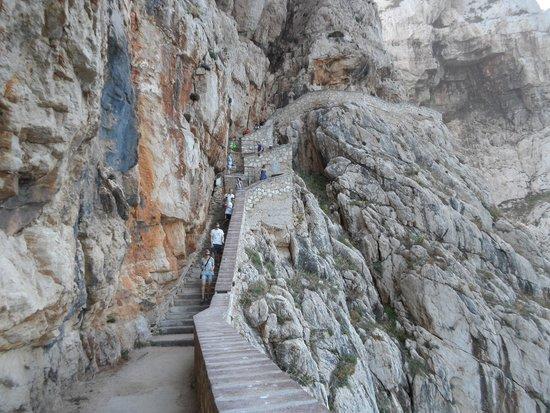 Grotte de Neptune (Grotta di Nettuno) : Escala del Cabirol