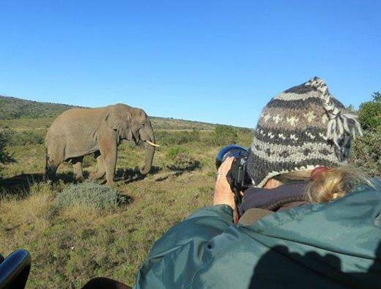 HillsNek Safaris, Amakhala Game Reserve : Game drives are excellent