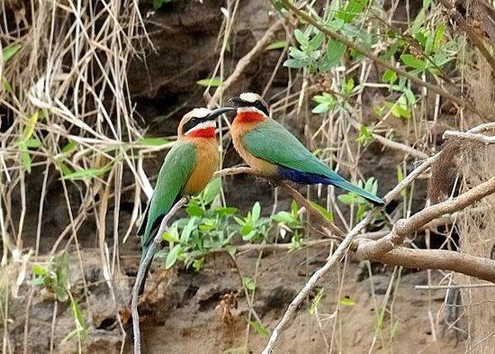 Selous Game Reserve : lungo il Rufiji