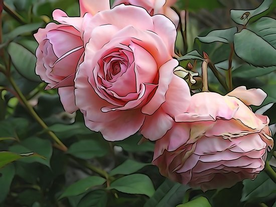 Croft Gate Bed and Breakfast: Rose in Martins's garden