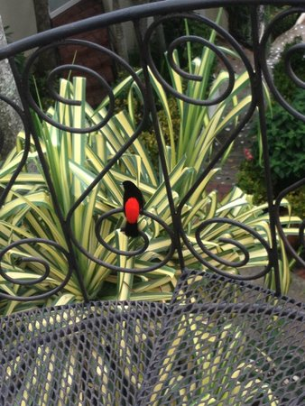 La Mariposa Hotel: Pretty Bird