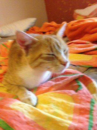 San Art Floating Hostel: Dosan the cat