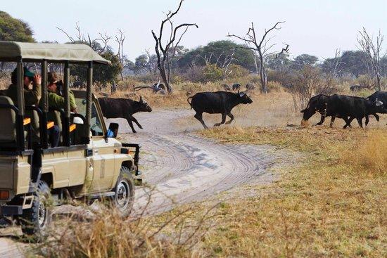 Game Drive at Savute Safari Lodge