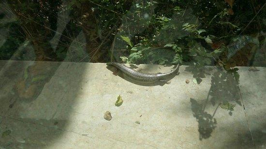 Nahrawess Hotel : spotkasz jaszczurki