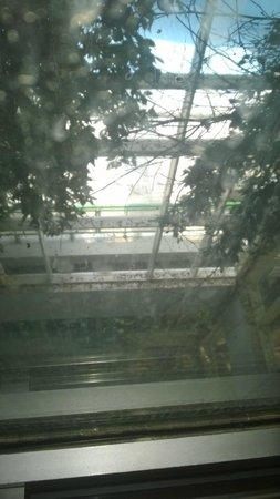 Nahrawess Hotel : brudne szyby w windach i suche  liście z drzew