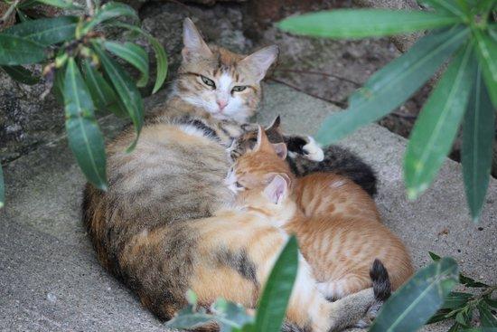 TUI BLUE Marmaris: resident cats