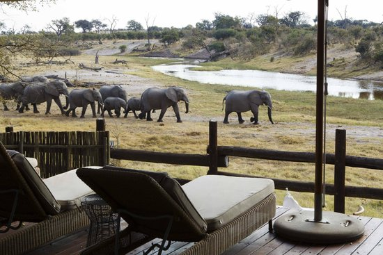 Savute Safari Lodge: View from the pool