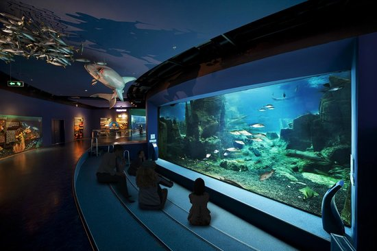 Hotel Foyer Des Guides Ollomont : Istanbul aquarium turkey top tips before you go with