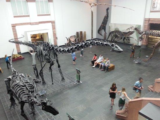 Senckenberg Natural History Museum (Naturmuseum Senckenberg) : dinosaur gallery