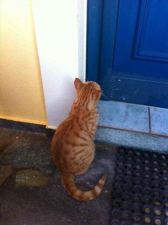 Marelina Villas & Apartments: gatto davanti alla porta della camera