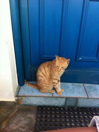 Marelina Villas & Apartments: gatto davanti all'ingresso di casa