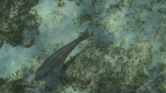 Holiday Paradise Resort: Unterwasserwelt Curacao