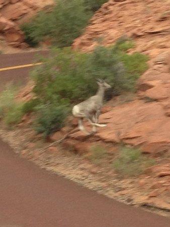Zion Canyon Scenic Drive: ..... et sur la route
