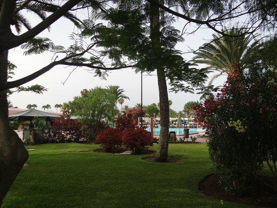 Canary Garden Club: ogrod