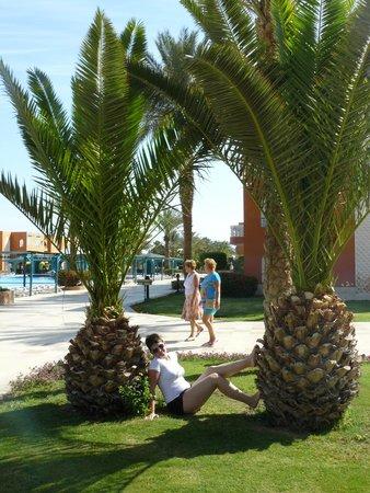 Sunrise Select Garden Beach Resort & Spa: пальмы