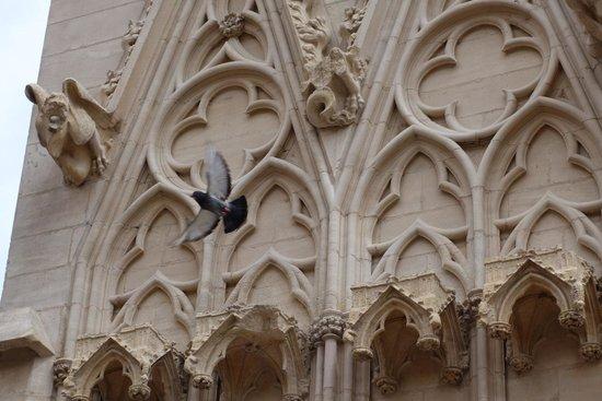 Cathédrale Saint-Jean Baptiste : Facade - Gargoyle & Pigeon