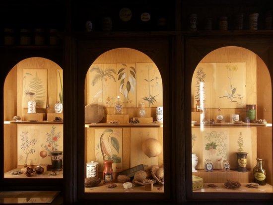 Deutsches Apotheken Museum : plants can be medicine