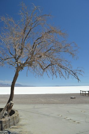 Bonneville Salt Flats : Stark beauty
