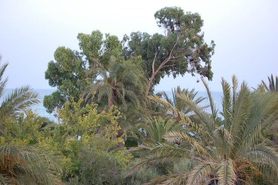 Club Med Djerba la Douce : VUE DE LA CHAMBRE