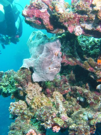 Magic Island Dive Resort : Frogfish