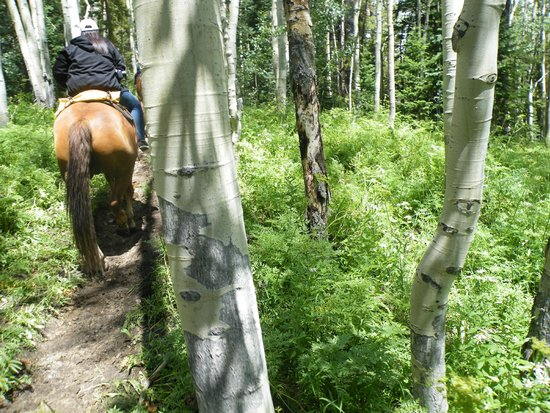 Fantasy Ranch Outfitters: Riding through the aspens