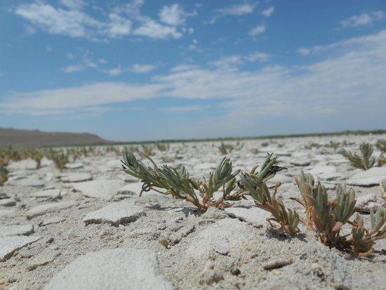 Antelope Island State Park : Sandy salty crusty beach