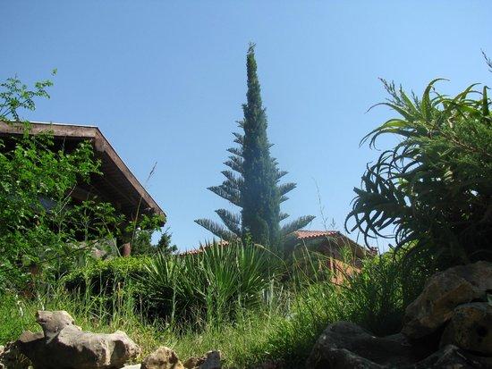 Suncity Hotel & Beach Club: Территория
