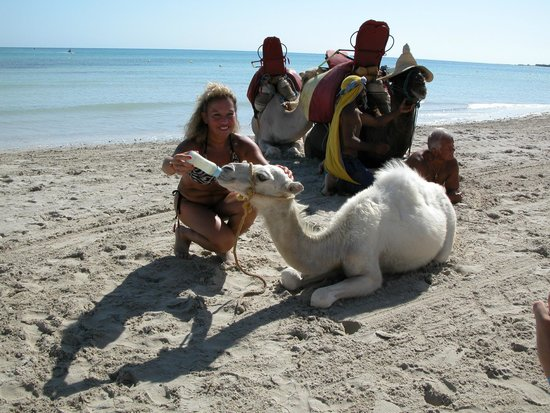 Yadis Djerba Golf Thalasso & Spa : biberon al cammellino