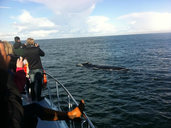 Hermanus Whale Cruises: close to the boat