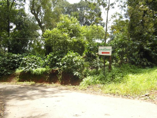 The Windflower Resort and Spa, Coorg: Road to Windflower