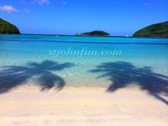Maho Beach Palm trees