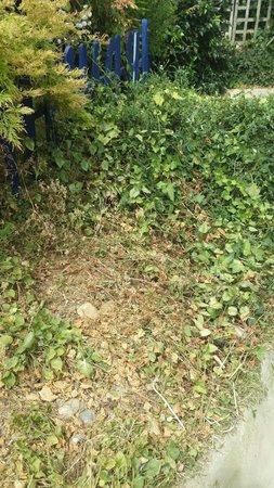 Earnley Butterflies Birds and Beasts: Dead gardens