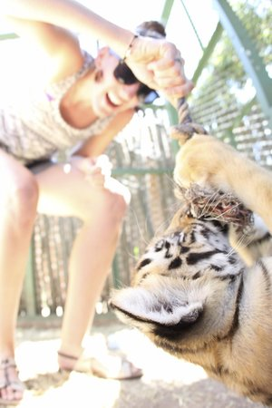 Mystic Monkeys and Feathers ZOO : my wife playing with the tiger cub