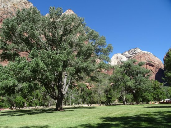 Zion Lodge: Lawn and the tree of life