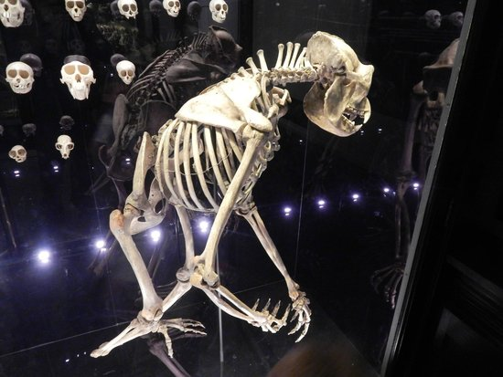 The Manchester Museum: Skeleton