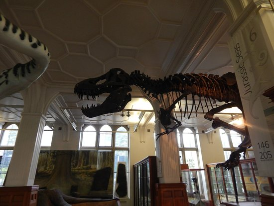 The Manchester Museum: Stan