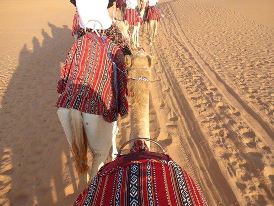 Qasr Al Sarab Desert Resort by Anantara: Balade en dromadaire / Camel Tour