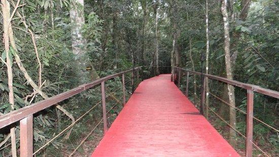 La Cantera Jungle Lodge: camino hacia habitaciones