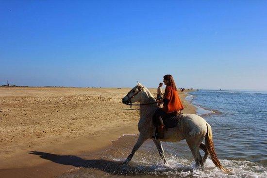 Promenade à cheval très sympa, des vrais professionnels - Avis de voyageurs  sur Mas de l Espiguette, Le Grau-du-Roi - TripAdvisor 83b6c21dc4a