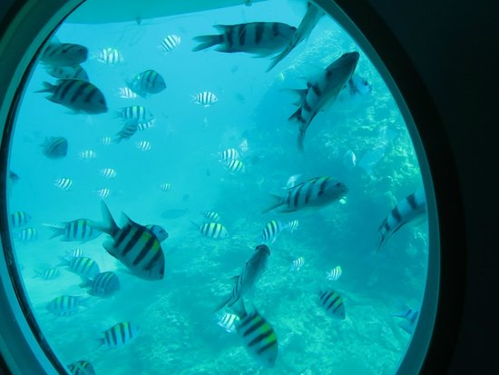 Odyssey Submarine Voyage of Fantasy: Only these type of fishes