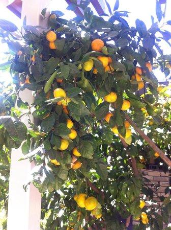 Barut Lara: Lunch under ett mandarinträd