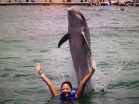Dolphin Explorer: ��