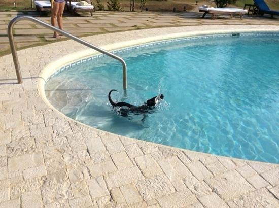 Jamaica Inn: Shadow refrescándose en la piscina
