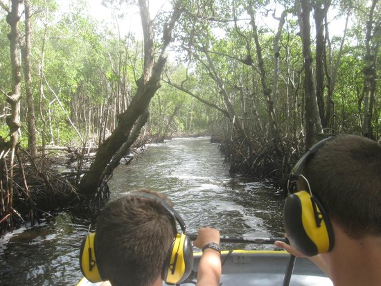 Speedy's Airboat Tours : Mangroves