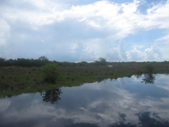Speedy's Airboat Tours : grasslands